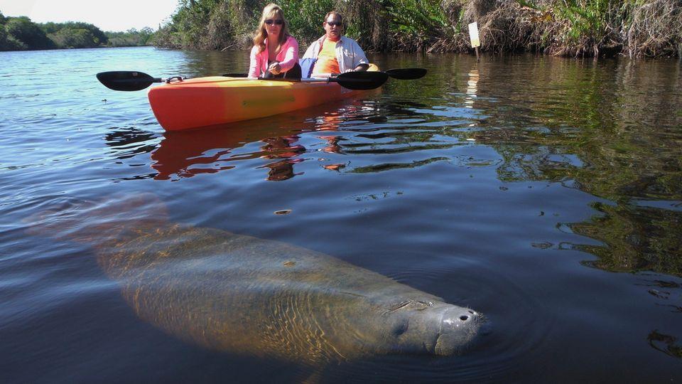 Marco Island Kayak Hire