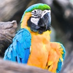 Did You Know the Lifespan of a Parrot is up to 100 Years? Visit the Bird Garden Of Naples Florida
