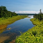 Enjoy 8 Miles of Pure Nature on Turner River